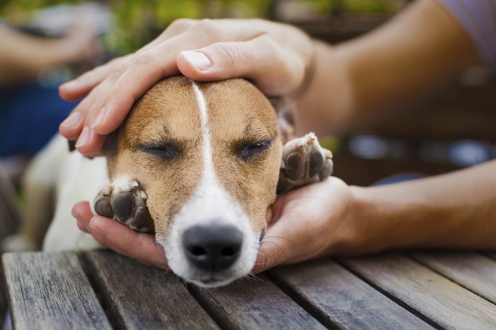 How to Care for Your Pet Animals by Showing Them Love