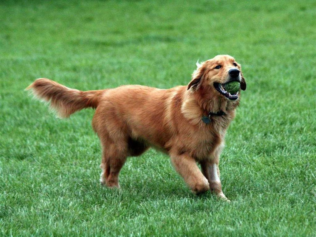 Awesome dog breeds for families