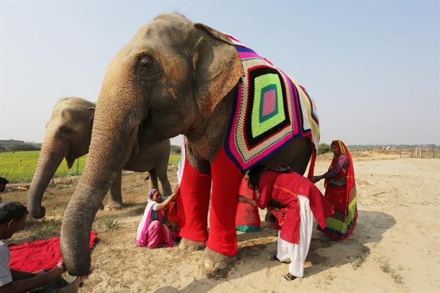 Caring Villagers Are Knitting Giant Sweaters For Elephants